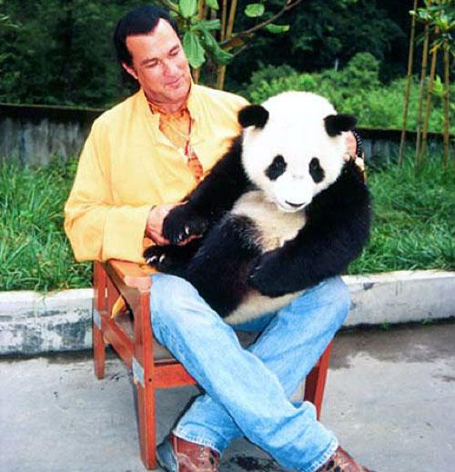 steven-seagal-panda
