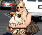 paris-hilton-dog