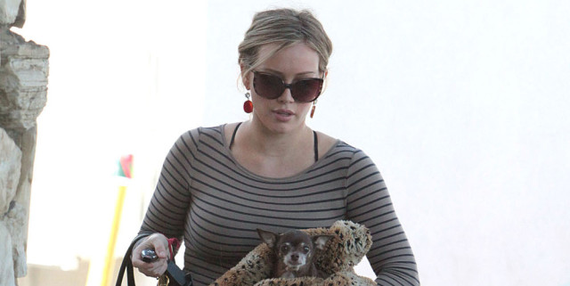 1019-hilary-duff-dog