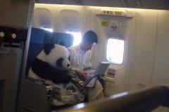 1207-panda-business