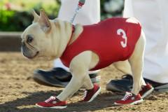 0111-sketchers-bulldog