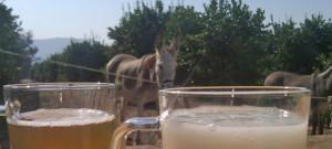 0131-donkey-semen