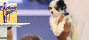 suri-cruise-puppy-deny-0717