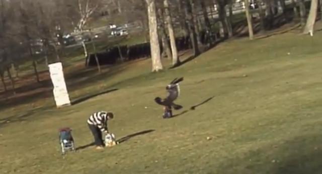 eagle-snatch