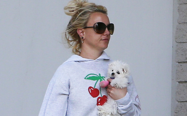 britney-spears-puppy