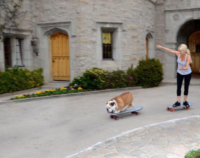 crystal-dog-skateboard