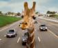 hangover-giraffe