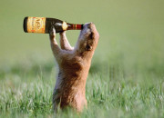 squirrel-drink