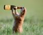 squirrel-drink