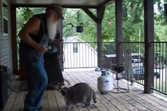 raccoon-dance