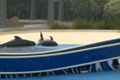 seaworld-whales
