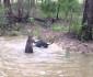 kangaroo-drown