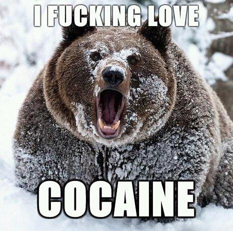 cocaine-bear