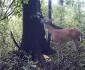 deer-fart