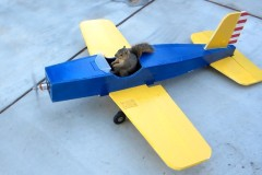 Squirrel Steals Airplane - the Whole Story