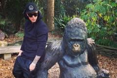 bieber-gorilla
