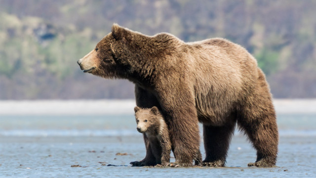 bears-04
