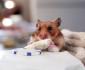 hamster-burrito