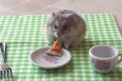 Tiny-hamster-eating-a-tiny-pizza