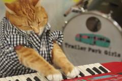keyboard-cat-2
