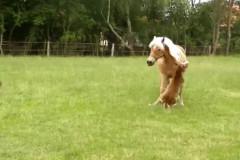 horse-smack
