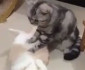 cat-massage
