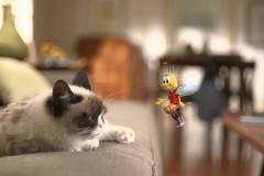 grumpy-cat-cheerios