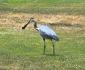 heron-gopher