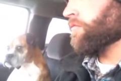 dog-human-ride