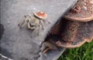 spider-jump