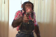 Who Gave the Drugged Up Chimp a Gun?