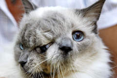 Frank and Louie Two-Faced Cat