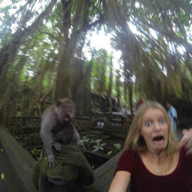 Woman takes selfie and freaks out when monkey attacks her.