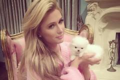 Paris Hilton buys 2 Pomeranians