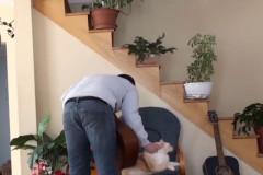 guy kicks cat