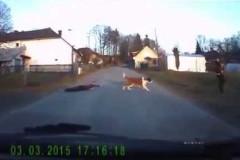 HQ-A-dog-walks-a-child Header