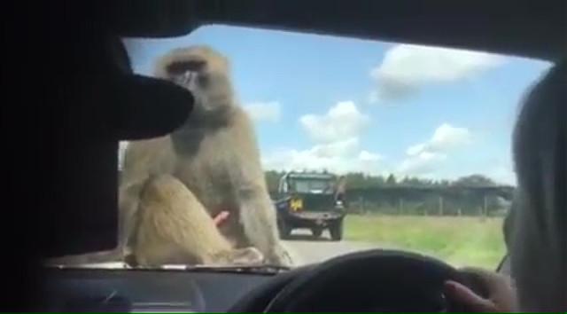 05-monkey-boner-sex-at-zoo-10