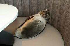 seal-pup-sleep