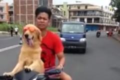 dog-moped