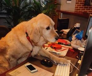 dog-blogger