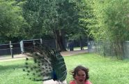 girl running from peacock