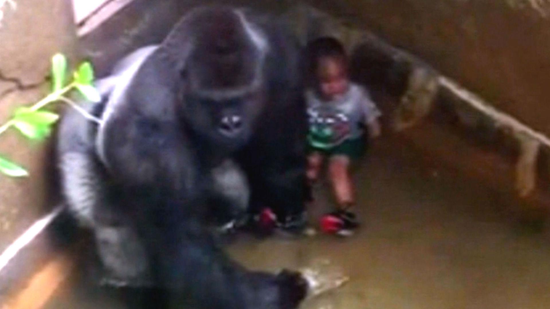 Cincinnati Zoo Begs Internet To Stop With Harambe Memes