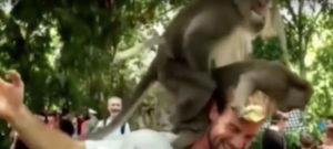 monkey-man-sex