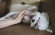 dog-flea