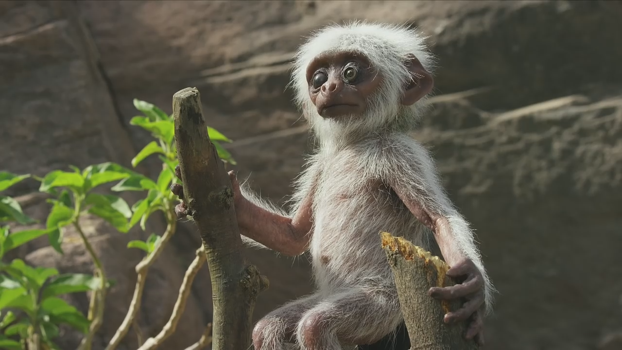 Monkeys mourn 'death' of fake monkey in new BBC documentary