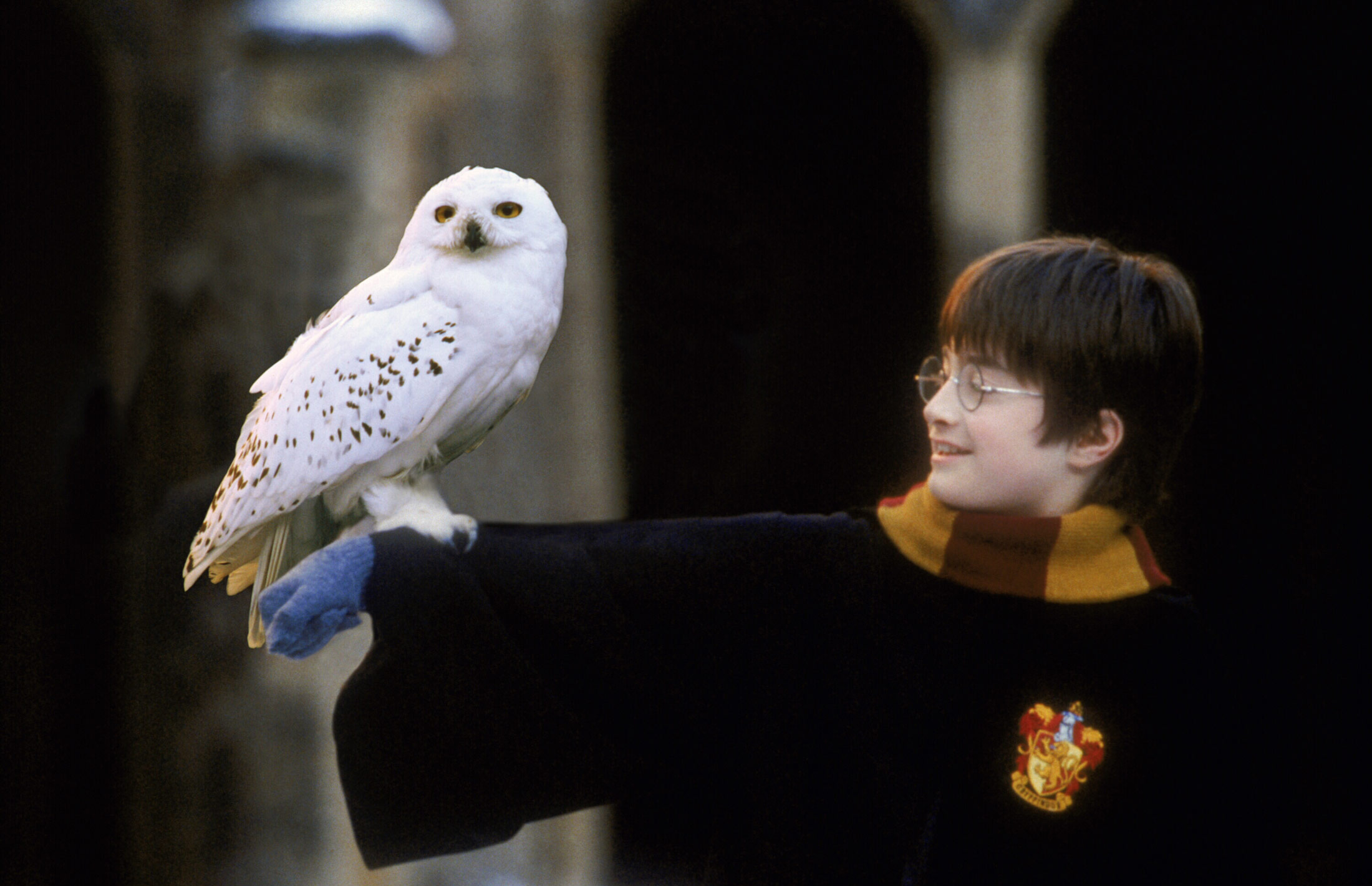 please stop buying owls as pets because of harry potter the blemish